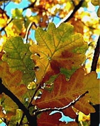 Tamme Leht alustab uut õppeaastat muudatustega
