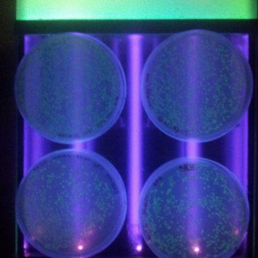 Biotehnoloogia kursuse laboripraktikumid (12LO ja 12ME)