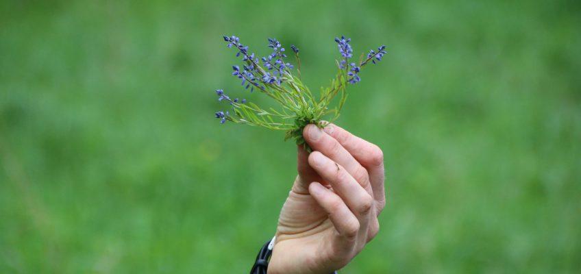 10.LO botaanika praktika