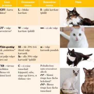 Bioloogia III kursusel saab määrata nii enda kui kasside geene